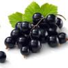 Black Currant (TPA) Flavor Concentrate-черная смородина